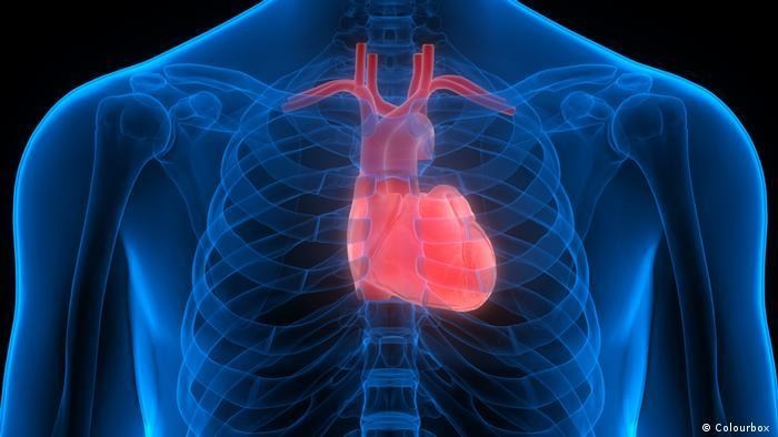دراسة حديثة توصلت إلى أن مشاكل في القلب تؤدي إلى ضعف النشاط الجيني في مركز الذاكرة بالدماغ.