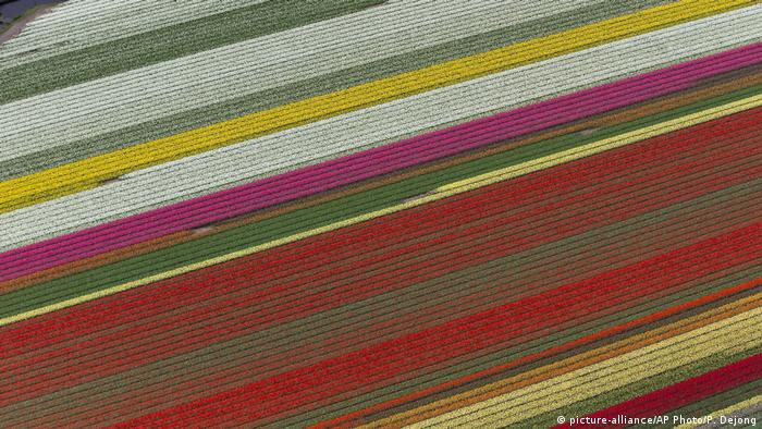 Tulip field in Keukenhof, aerial view (picture-alliance/AP Photo/P. Dejong)
