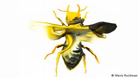 Η μέλισσα Ουάλας από την Ινδονησία θεωρείται η μεγαλύτερη στον κόσμο, εάν βέβαια υπάρχει ακόμη. Ωστόσο από το 1981 παραμένει άφαντη.