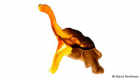 Αυτή η γιγάντια χελώνα εικάζεται ότι ζει στο νησί Φερναντίνα στο Αρχιπέλαγος Γκαλαπάγκος. Τουλάχιστον αυτό μαρτυρούν τα δαγκωμένα φύλλα των κάκτων και τα περιττώματα που βρέθηκαν στο νησί. Τελευταία φορά είδαν το ζώο το 1906.
