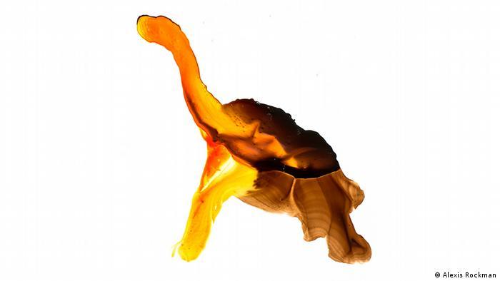 Гигантская фернандинская черепаха