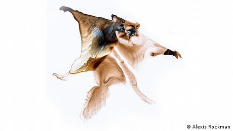 Ο ιπτάμενος σκίουρος της Ινδίας με το κόκκινο τρίχωμα μπορεί να το σκάσει πηδώντας στον αέρα, όταν βρεθεί σε κίνδυνο. Το τελευταίο του άλμα υπό ανθρώπινο βλέμμα ήταν το 1981.