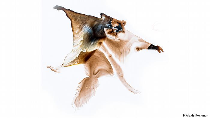 Flying Squirrel (Alexis Rockman)