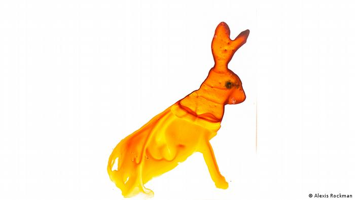 Мексиканский кролик