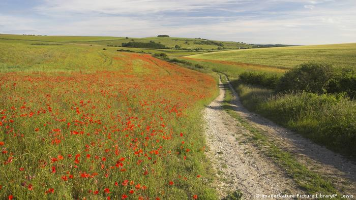 Rural road running through poppy fields. Photo credit: Imago/Nature Picture Library/P. Lewis.