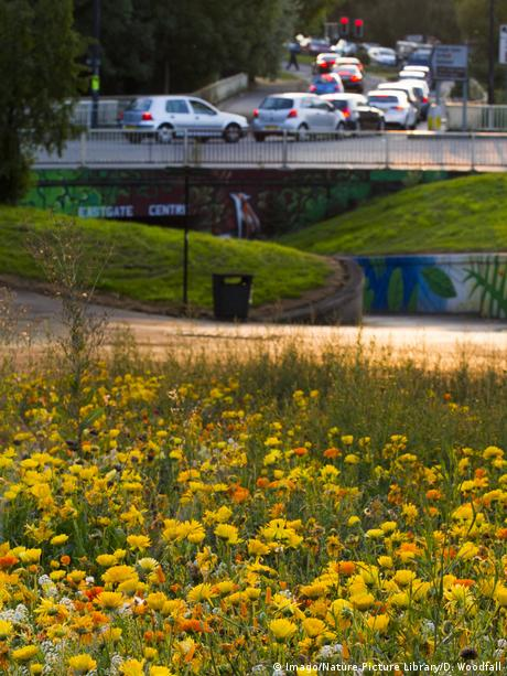 Flowers sown along motorway underpass to attract wild bees. Photo credit: Imago/Nature Picture Library/D. Woodfall.