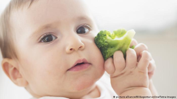 Baby (12-17 Monate) haelt Brokkoli, Baby girl (12-17 months) holding broccoli (picture-alliance/Bildagentur-online/Tetra-Images)