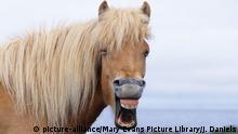 Lachende Tiere Pferd
