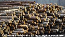Softwood lumber is stacked at Murray Brothers Lumber Company woodlot in Madawaska, Ontario (picture alliance/AP Photo/S. Kilpatrick/The Canadian Press)