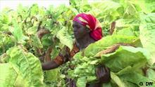 Malawi Tabak