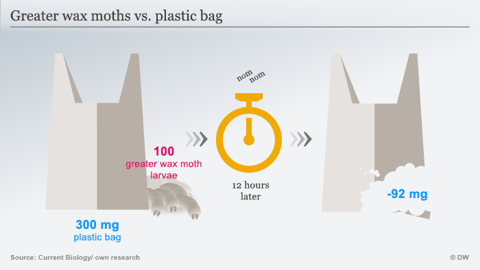 Infografik Greater wax moths vs. plastic bag ENG
