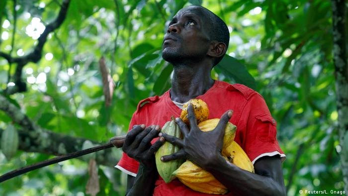 A farmer carries cocoa pods at a cocoa farm in Agboville, Ivory Coast.