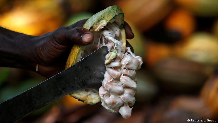 Elfenbeinküste Kakao Anbau Ernte (Reuters/L. Gnago)