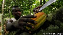 A farmer prepares to cut cocoa pods at a cocoa farm in Agboville, Ivory Coast.