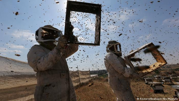 Palestinian beekeepers collect honey at a farm in Rafah in the southern Gaza Strip