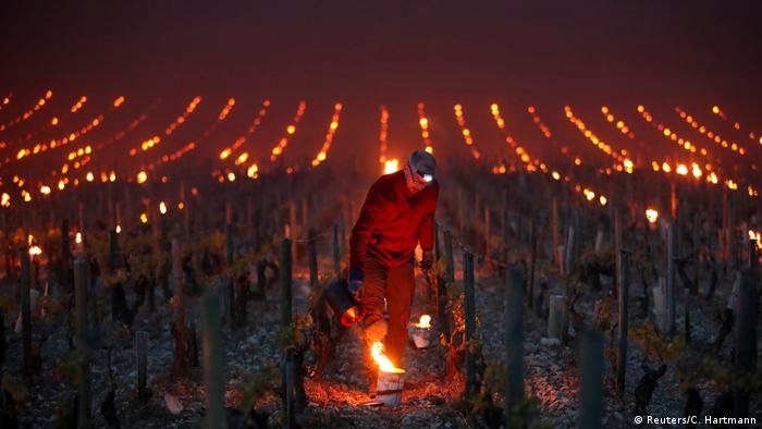 Workers and wine growers light heaters early in the morning to protect vineyards from frost damage outside Chablis (Reuters/C. Hartmann)