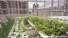 USA Urban farming in New York