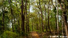 Caption: Rema-Kalenga Wildlife Sanctuary is a protected forest and wildlife sanctuary in Bangladesh. Keywords: Rema-Kalenga, wildlife, bangladesh Copyright: DW/M. Mamun