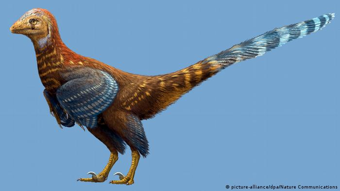 China Fossilfund Dinosaurier mit Federn entdeckt (picture-alliance/dpa/Nature Communications)