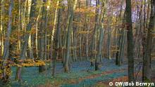 Forest change / Beech forest