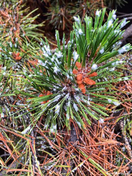 Forest change, Frisco, Colorado
