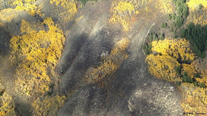 USA Colorado- forest aerial