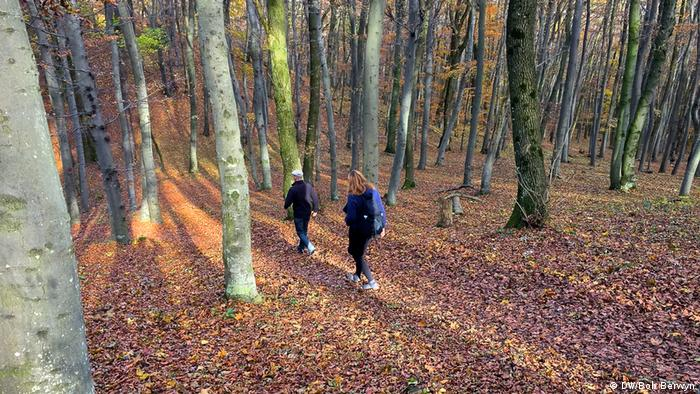 Forest change / Wienerwald hiking
