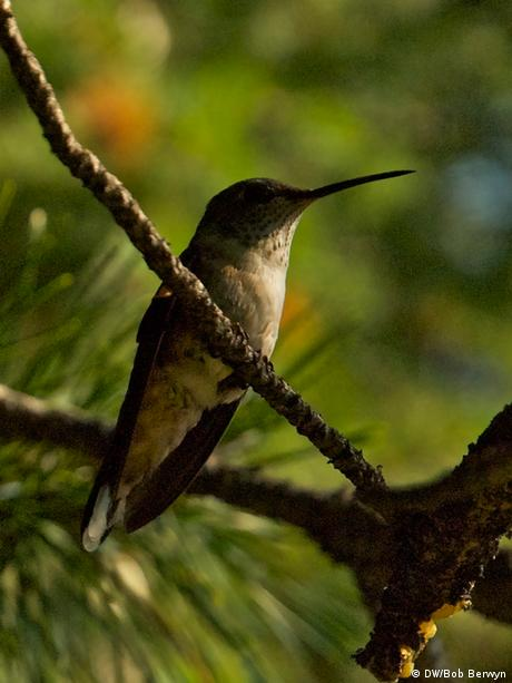 Forest change / Hummingbird in Colorado forest