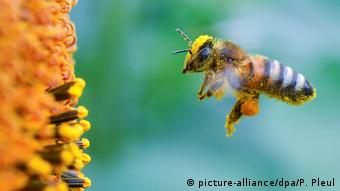 Οι μέλισσες είναι τα πιο υποτιμημένα έμβια όντα