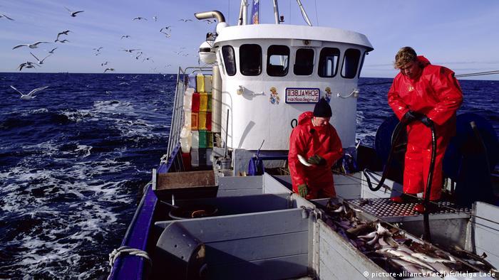 Ostsee Fischfang Kabeljau