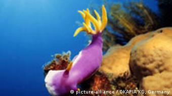 Korallenriff der Philippinen. Quelle: picture-alliance