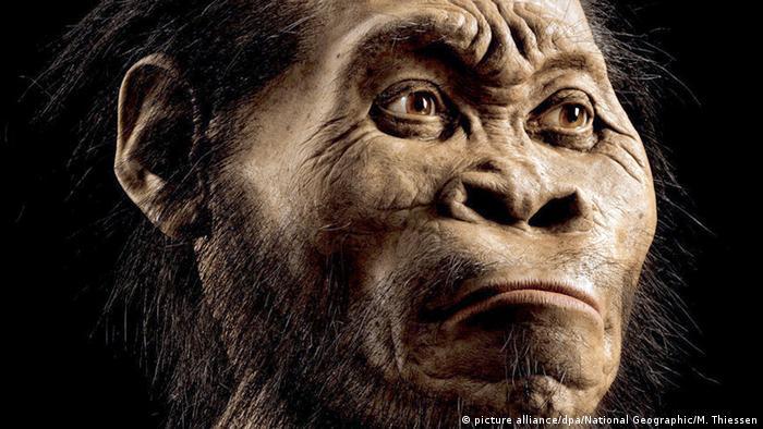 Más de 1.500 huesos fósiles, pertenecientes a al menos 15 individuos de distintas edades de Homo naledi, fueron descubiertos en 2015 en una remota cámara dentro del sistema de cuevas Rising Star, en Sudáfrica. Sin embargo, los expertos no se ponen de acuerdo: ¿se trataba de un Homo sapiens primerizo o de un Homo erectus primerizo?