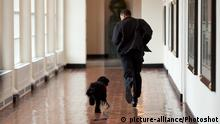 The Obama family was introduced to a prospective family dog at a secret greet on a Sunday. After spending about an hour with him, the family decided he was the one. Here, the dog ran alongside the President in an East Wing hallway. The dog returned to his trainer while the ObamaÕs embarked on their first international trip. I had to keep these photos secret until a few weeks later, when the dog was brought ÔhomeÕ to the White House and introduced to the world as Bo. |