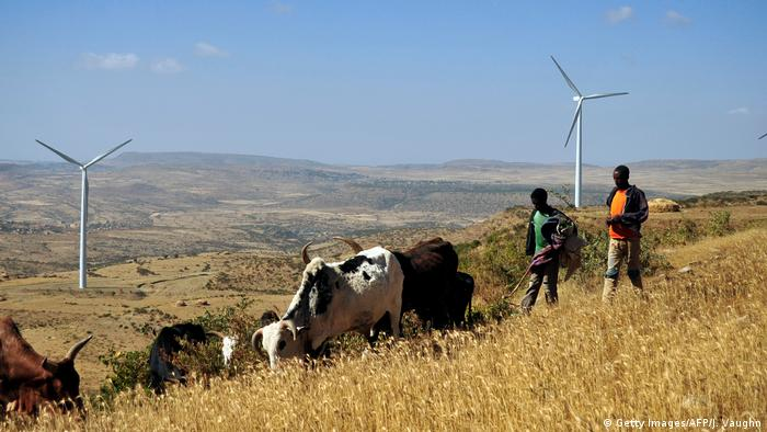 Two men herd cattle in front of a windpark