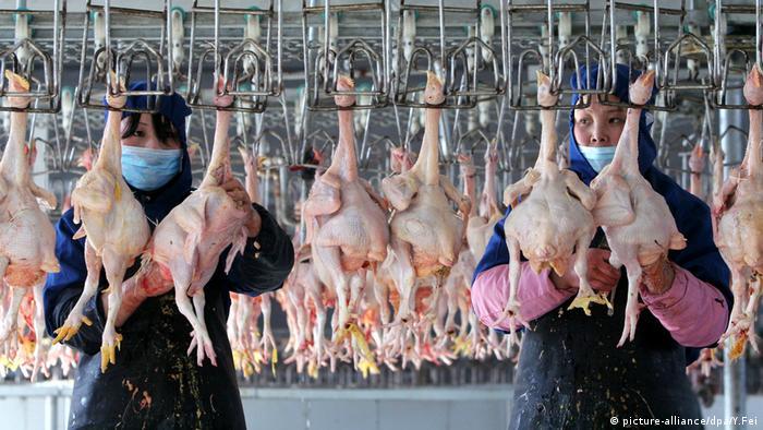 Producción de carne de ave en China (imagen de archivo).