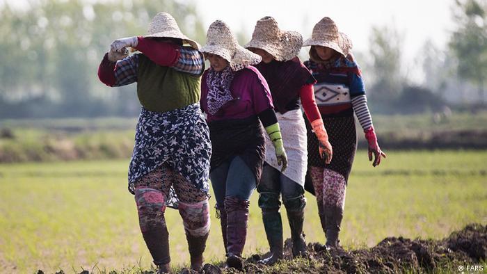 Iran Reispflanzende Frauen im Nord Iran