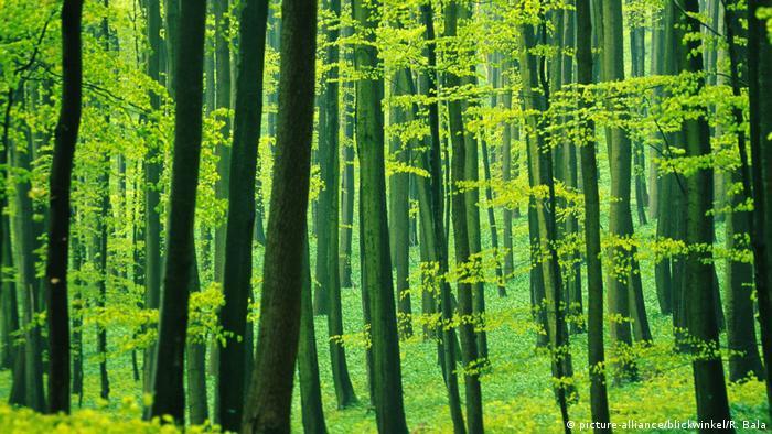 Национальный парк Хайних