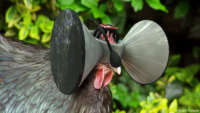 Ein ausgestopftes Huhn mit einem VR-Headset. Aus der Ausstellung Food Revolution 5.0 im Kunstgewerbemuseum Berlin.
