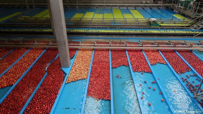 vollautomatische Wasserstraßen zur Einteilung der Äpfel