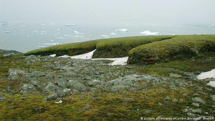 Verde na Antártida