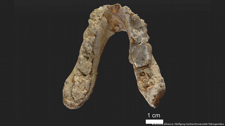 Der älteste Vormensch könnte aus Europa statt Afrika stammen