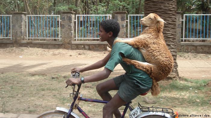 Jovem de bicicleta com ovelha nas costas