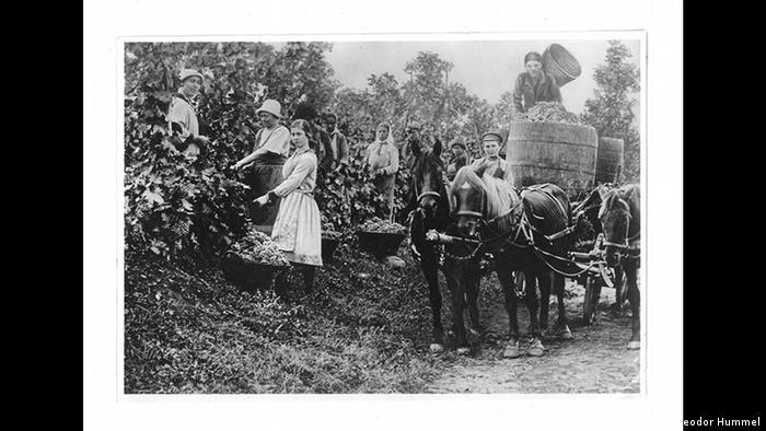 Сбор урожая. Еленендорф, 1925 г.