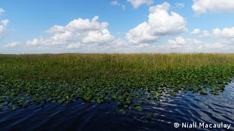 Marshland in the Florida Everglades