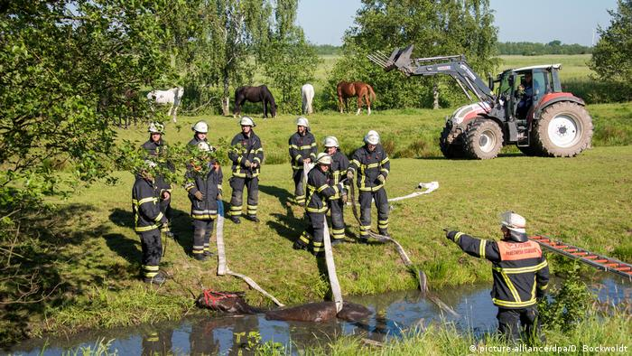 Hamburg - Horse is rescued from the water (picture-alliance/dpa/D. Bockwoldt)