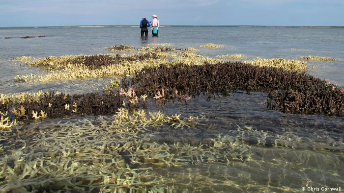 Bleached Kimberley reef at low tide