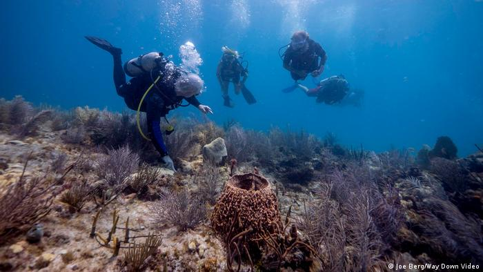 Coral restoration mission in the Florida Keys (Joe Berg/Way Down Video)