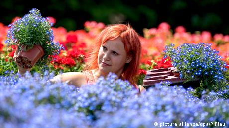 A woman holds up two pots of blue flowers