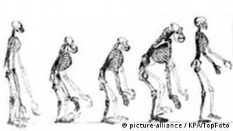 Darstellung der Entwicklungsgeschichte des Menschen nach Charles Darwin (Foto: Huxley's book)
