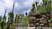Deutschland - Erlebniswandern: Wanderweg in den Weinbergen